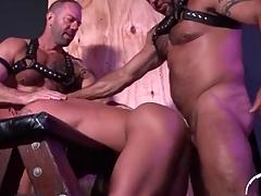Hot bear bottom fucked by two bears