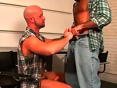 Bald bears kissing and sucking cock lustily